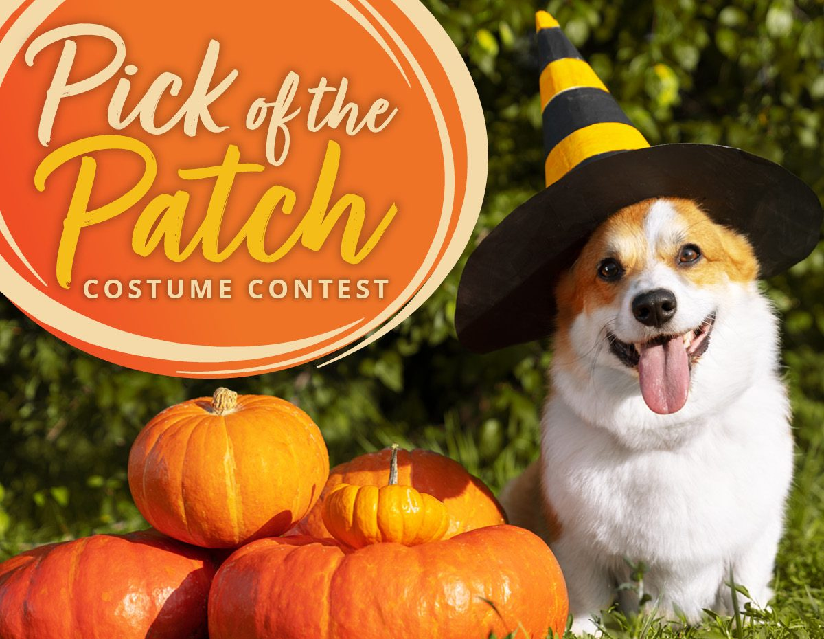 Picture of Picks of the Patch - NATCO's Costume Contest Winners