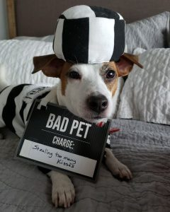 Skip the Jailed Puppy